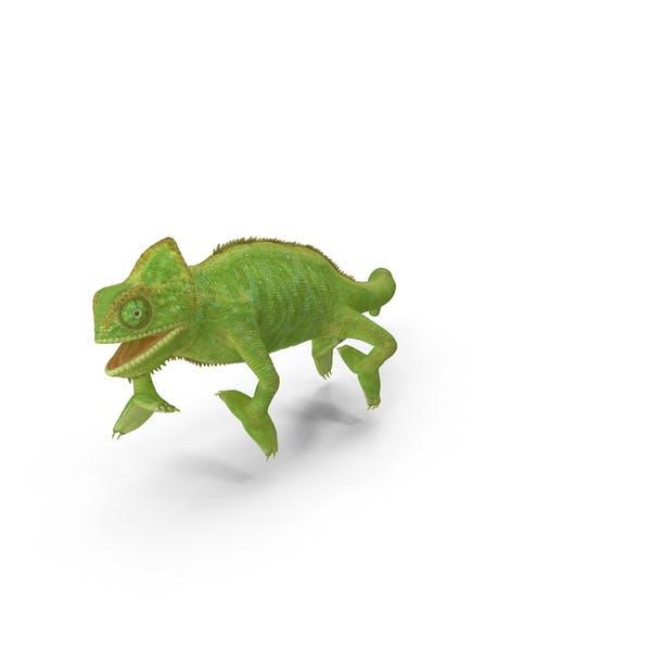 Thumbnail for Chameleon Walking on Branch Pose
