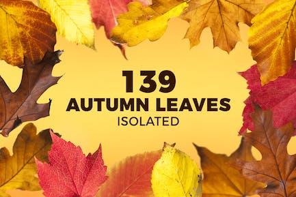 139 Hojas de otoño aisladas