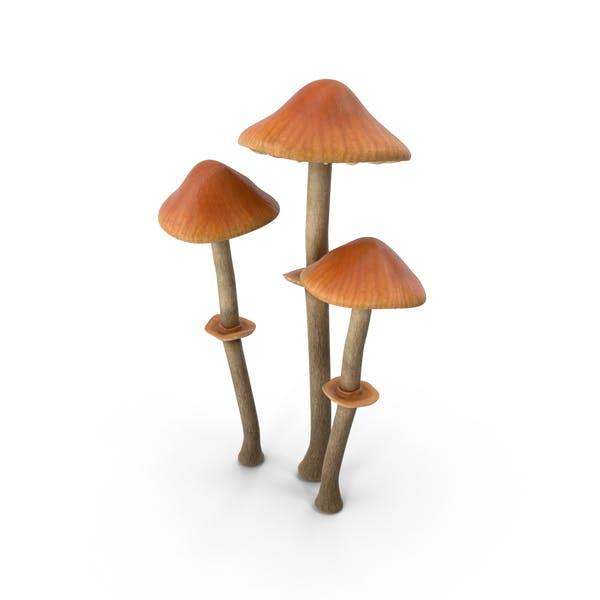 Thumbnail for Pholiotina Rugosa Mushrooms