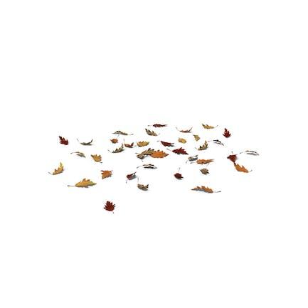Herbst Eichenblätter