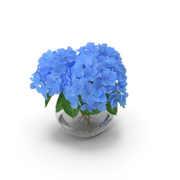 Thumbnail for Hydrangea Macrophylla Nikko Blue in Glass Bowl