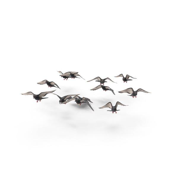Thumbnail for Aves en bandada