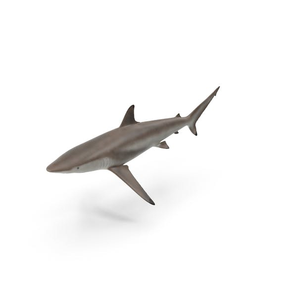 Cover Image for Shark
