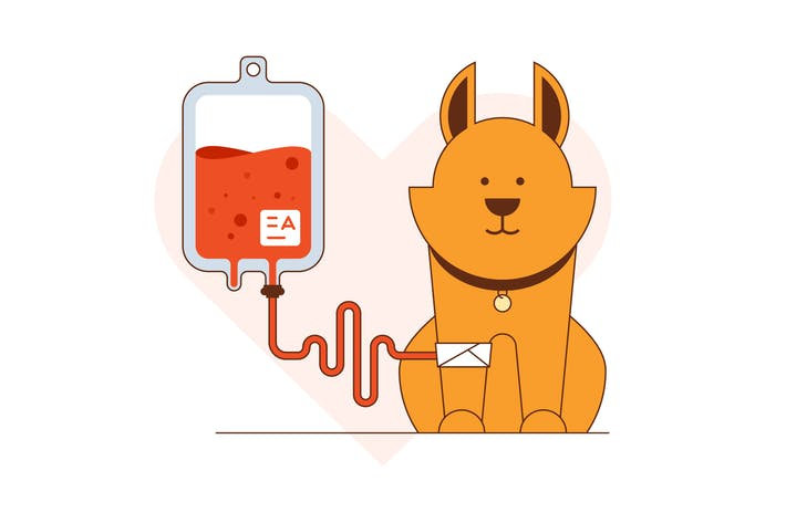 Thumbnail for Blood donation for dogs