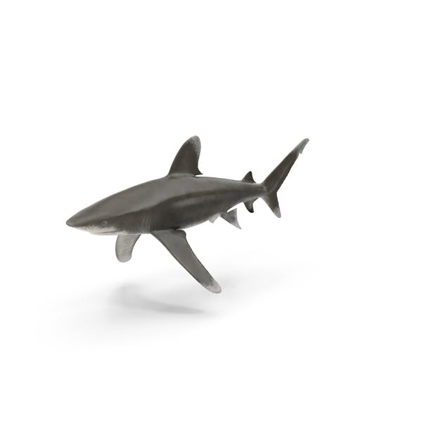 Thumbnail for Oceanic Whitetip Shark