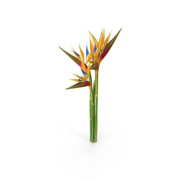 Thumbnail for Bird of Paradise Flowers