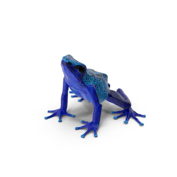 Cover Image for Poison Dart Frog