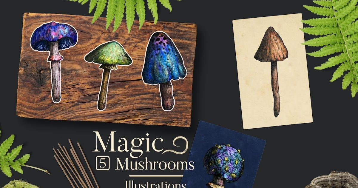 Download Magic Mushrooms Illustrations by FreezeronMedia