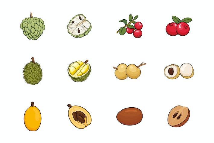 Thumbnail for Fruits Illustration V.8