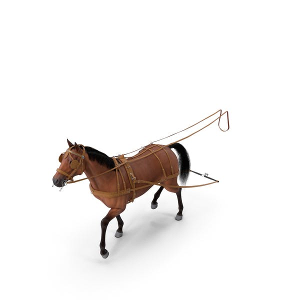 Thumbnail for Horse Drawn Leather Single Driving Harness Walking Pose Fur