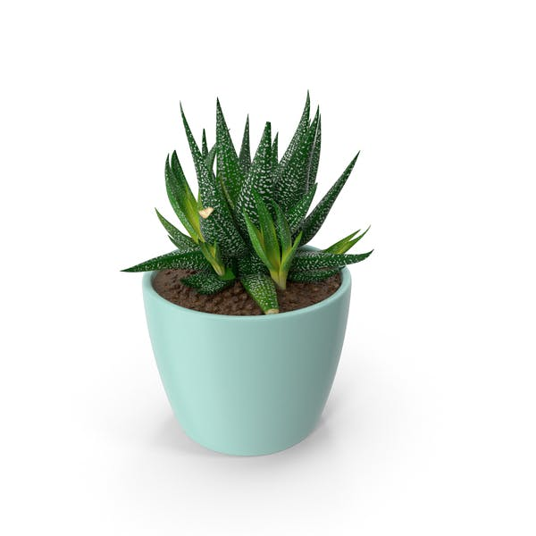 Thumbnail for Succulent
