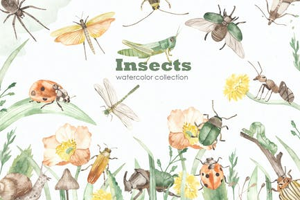 Insects watercolor collection