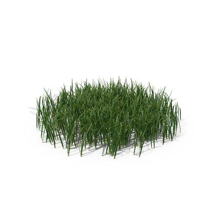 Einfaches Gras (Medium)