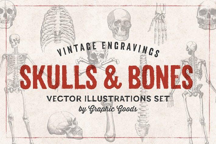 Cover Image For Skulls & Bones - Engraving Style Illustration Set