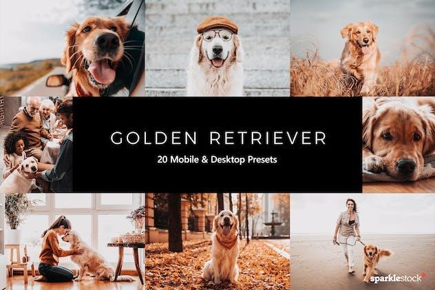 20 Golden Retriever Lightroom Presets & LUTs