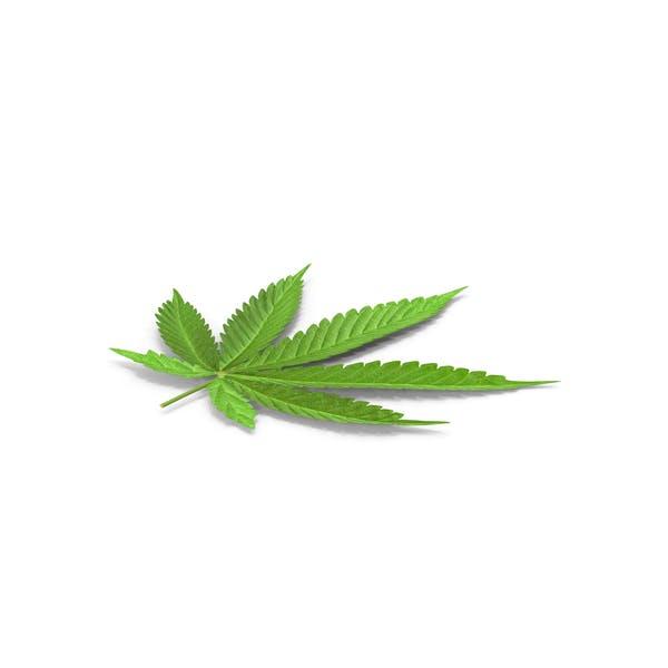 Cannabis-B