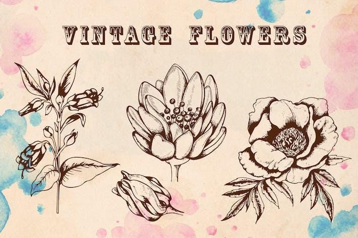 Thumbnail for Flores Vintage
