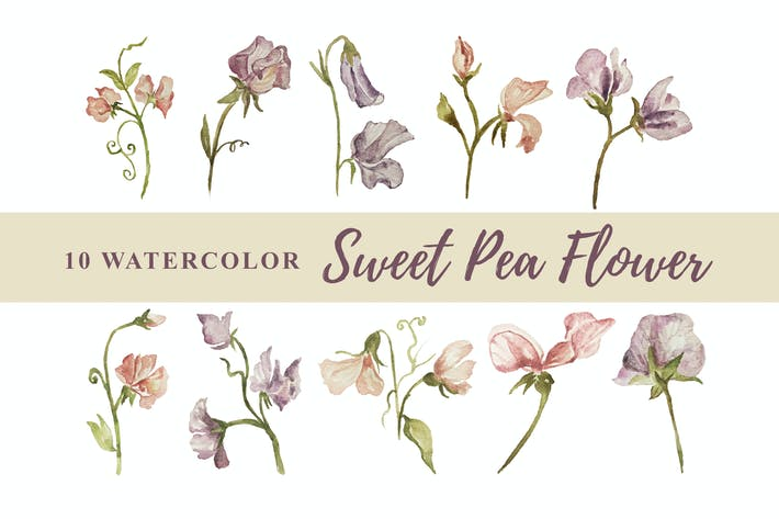 Thumbnail for 10 Watercolor Sweet Pea Flower Illustration