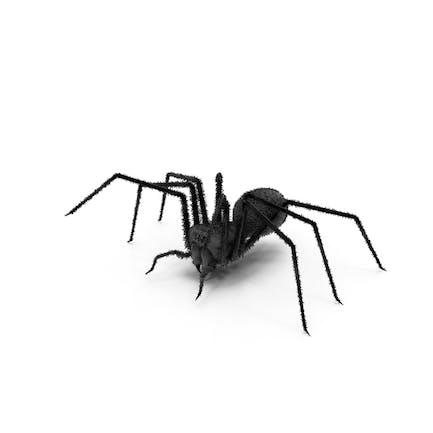 Spinne schwarz
