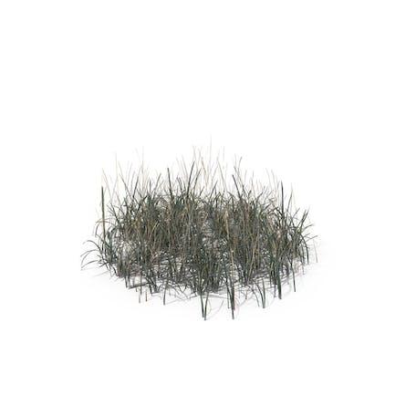 Simple Grass (Medium)