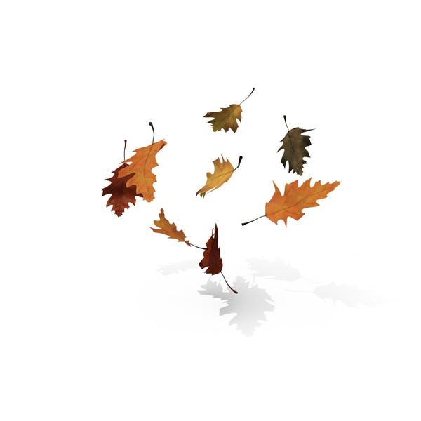 Thumbnail for Fall Oak Leaves