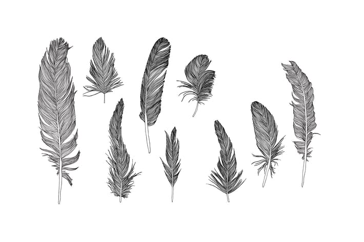 Thumbnail for Hand drawn vector feathers set