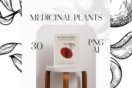 30 Medicinal Plants