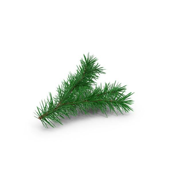 Pine Tree Sprig