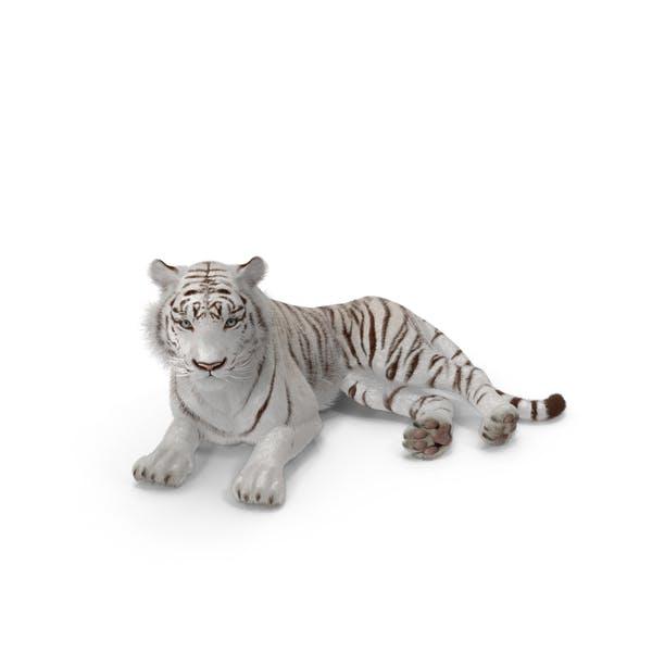 Lying White Tiger