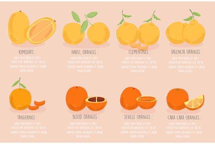 Tipos de Naranjas Ilustración