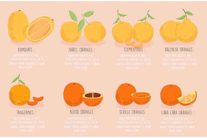 Types of Oranges Illustration