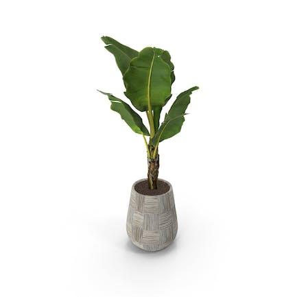 Pflanze in grauer Vase