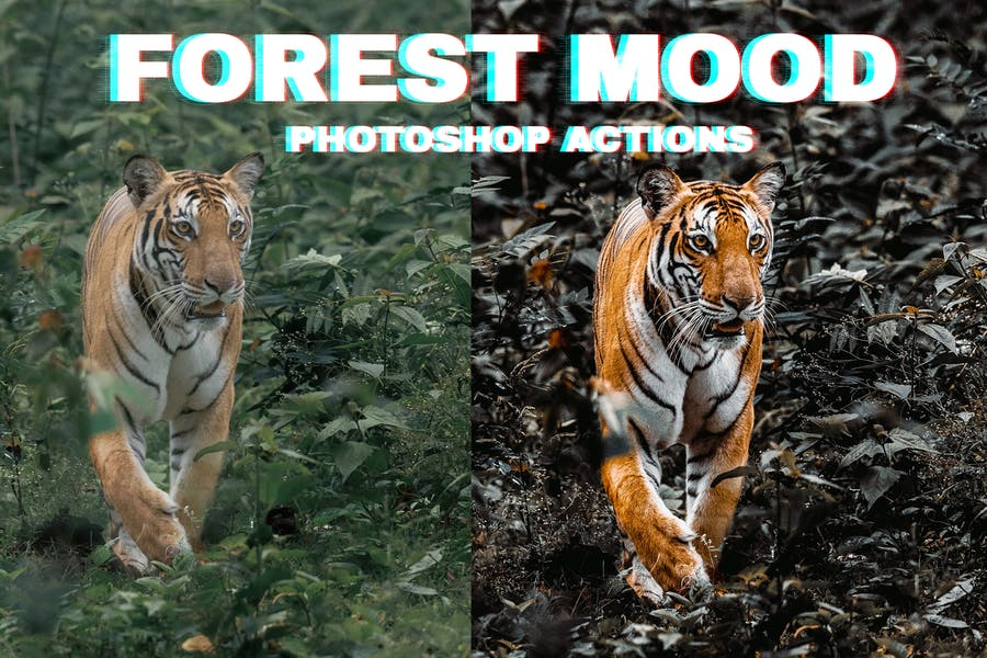Forest Moody Photoshop Actions