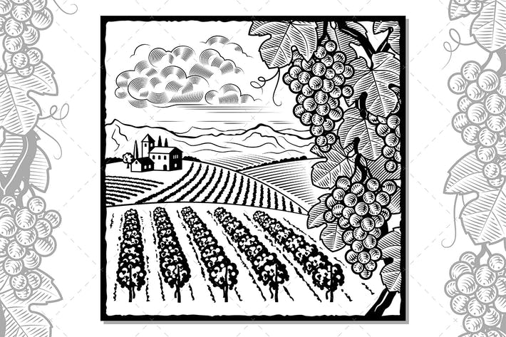 Thumbnail for Vineyard Landscape Black And White