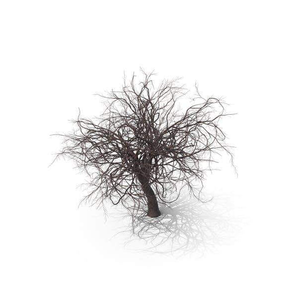 Cover Image for Sakura Bare