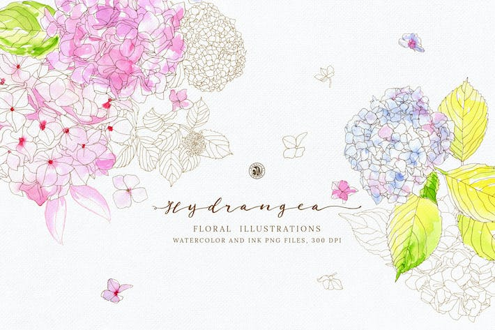 Thumbnail for Hydrangea Watercolor and Ink