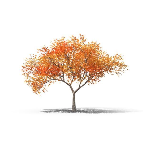 Thumbnail for Fall Tree