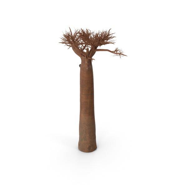 Thumbnail for Naked Baobab