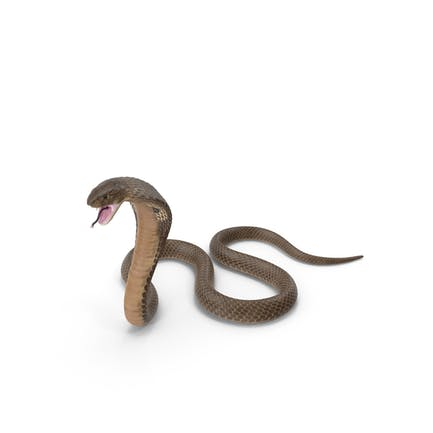 Beige Cobra Angriff Pose