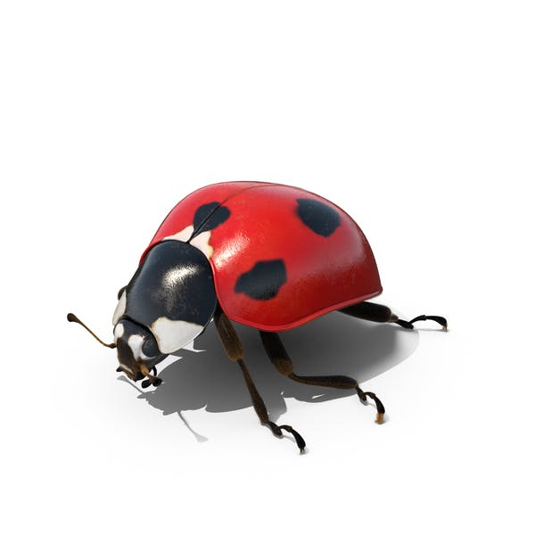 Thumbnail for Ladybug in Outdoor Lights