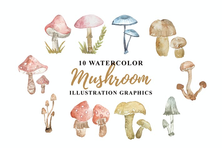 Thumbnail for 10 Watercolor Mushroom Illustration Graphics