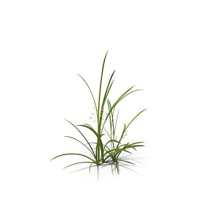 Quaking-Grass