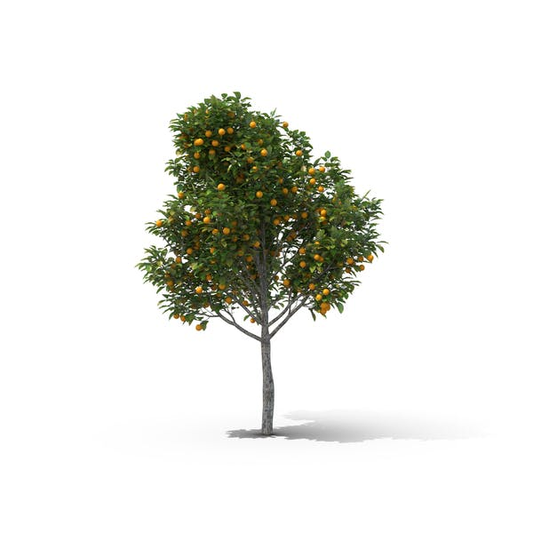 Cover Image for Orange Tree