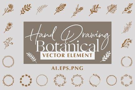 Dessin à la main Vecteur botanique
