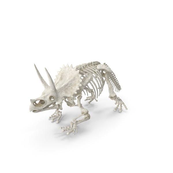 Triceratops Horridus Skeleton