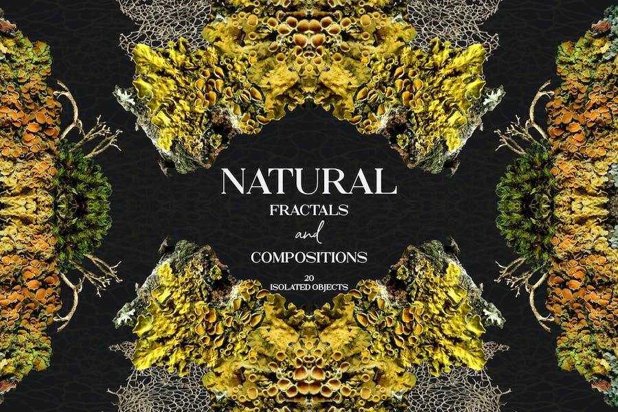 Natürliche Fraktale und Kompositionen
