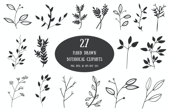 Thumbnail for 20+ Handdrawn Botanical Cliparts