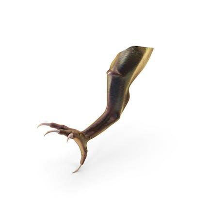 Magical Creature Leg Claw