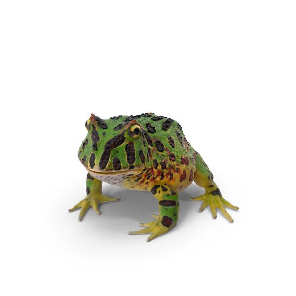 Pacman Frog By Pixelsquid360 On Envato Elements