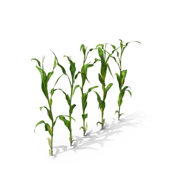 Thumbnail for Corn Row